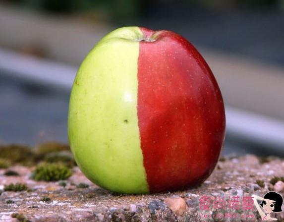 英国老人种出半红半绿的苹果